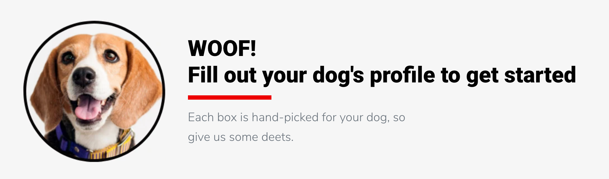Dog and CTA to fill out your profile